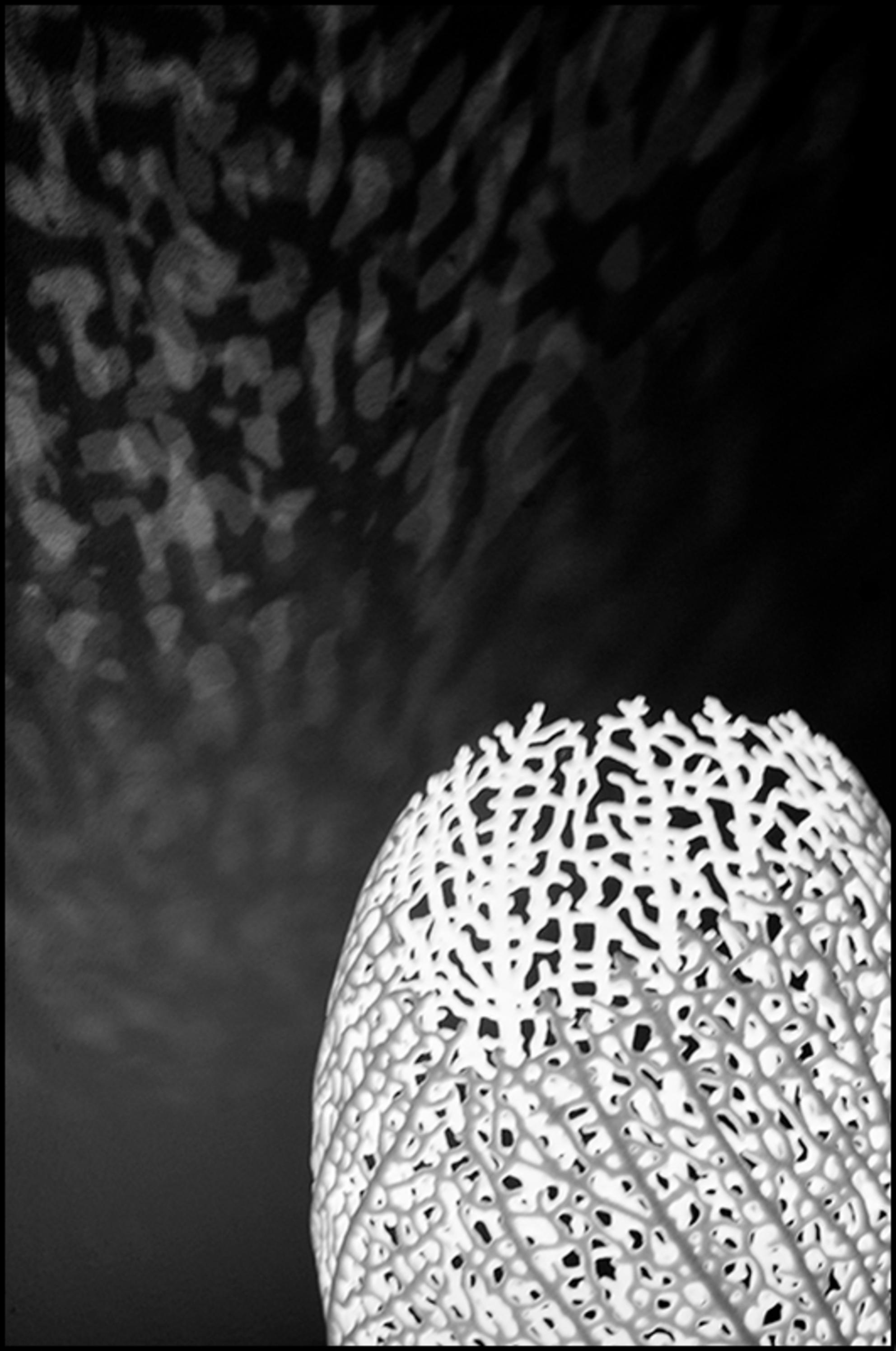 ddw 11 - Deze plaat behoeft niet veel uitleg denk ik zo. Het is wel duidelijk waar vandaan de designer zijn inspiratie vandaan heeft gehaald. Vooral de geproj - foto door mphvanhoof_zoom op 01-01-2014 - deze foto bevat: licht, lamp, schaduw, kunst, eindhoven, art, vormgeving, koraal, verlichting, mystiek, constructie, design, projectie, onderwaterwereld, onderwaterleven, lichtobject, ontwerpen, zwart wit, ontwerpers, dutch design week, industrieel ontwerp