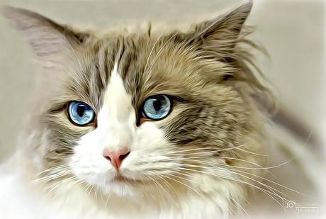 Betoverende ogen