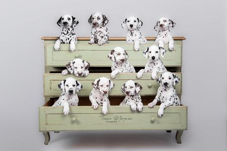 a closet full of spots