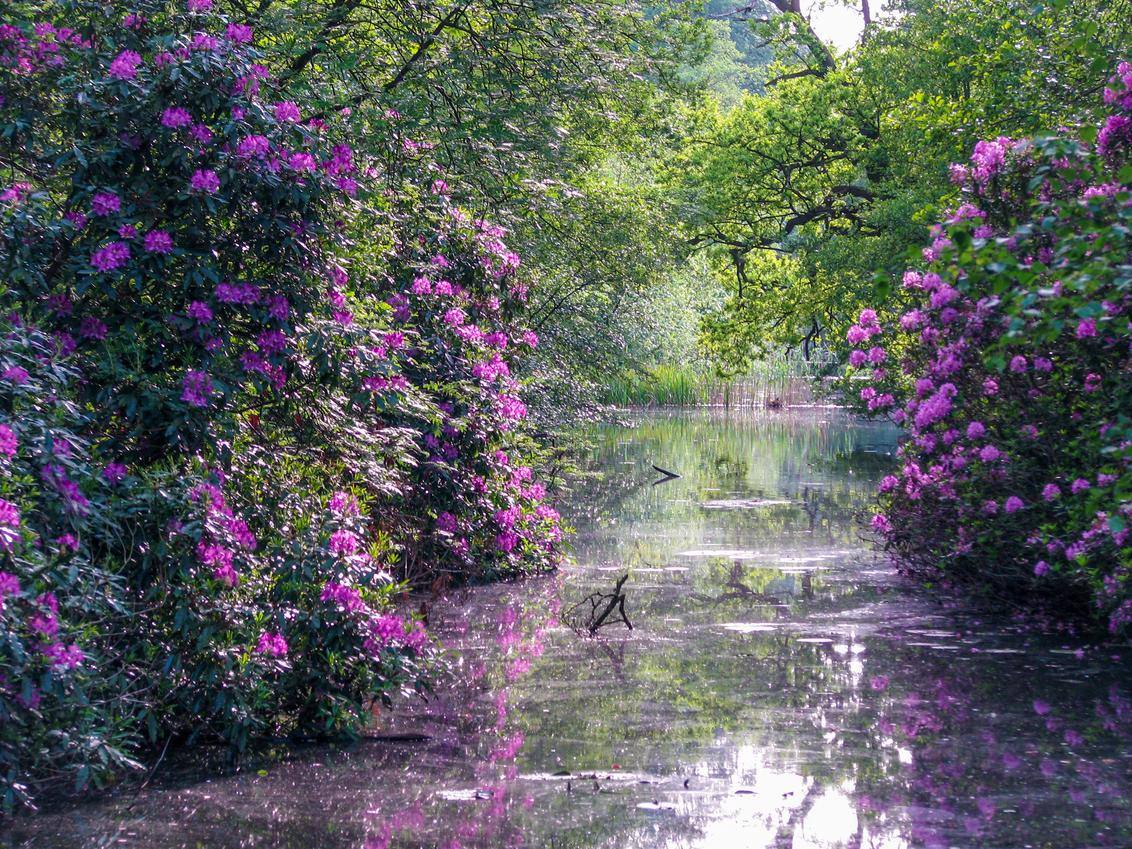 mooie natuur - ik vond de reflexie op het water erg mooi - foto door sipmaurer op 23-03-2015 - deze foto bevat: voorjaar