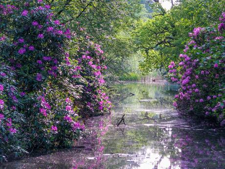mooie natuur