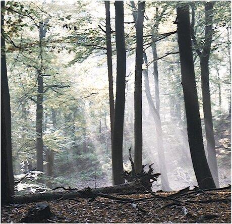 Bilderbergse bos