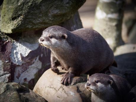 Otter Paartje