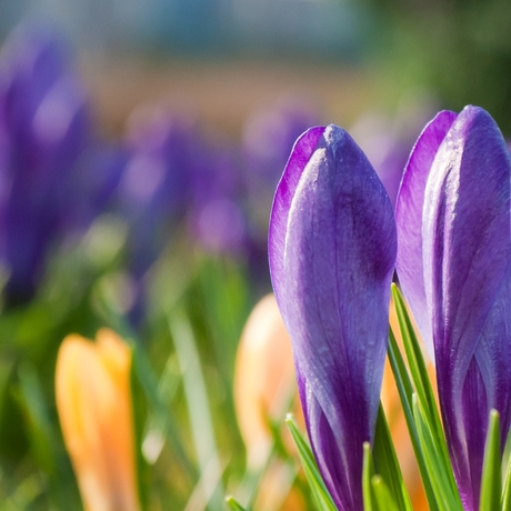 Op zoek naar de lente