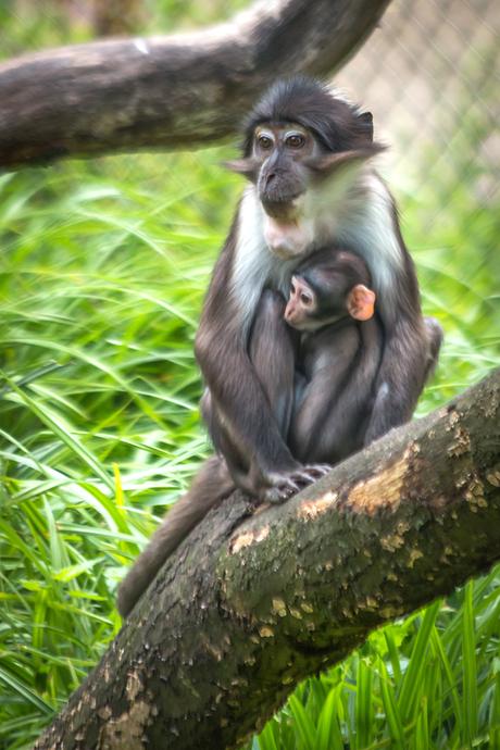 aap met jong