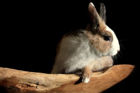 konijn - konijn - foto door misskell op 19-01-2015 - deze foto bevat: dieren, huisdier