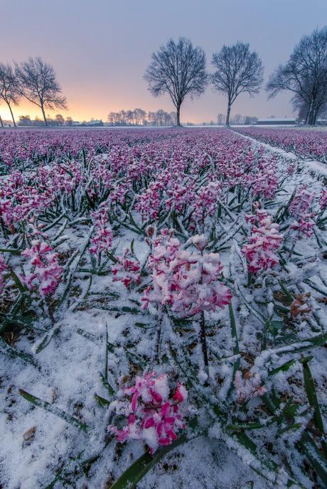 Sneeuw in de lenten
