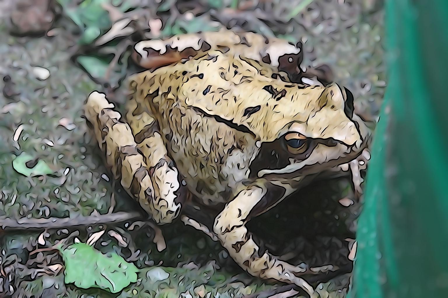 Pad - Pad in aquarel - foto door joke-37 op 16-04-2021 - deze foto bevat: kikker, echte kikker, pad, organisme, echte pad, terrestrische dieren, aanpassing, amfibie, terrestrische plant, snuit
