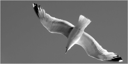 Van onderen.... - Interessante vogels.... - foto door Saskiajans op 01-02-2013 - deze foto bevat: zee, meeuw, zeemeeuw, nederland, wadden, waddenzee, eiland, schiermonnikoog, netherlands, seagull