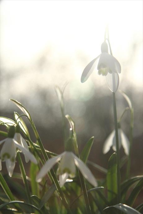 het lente gevoel..