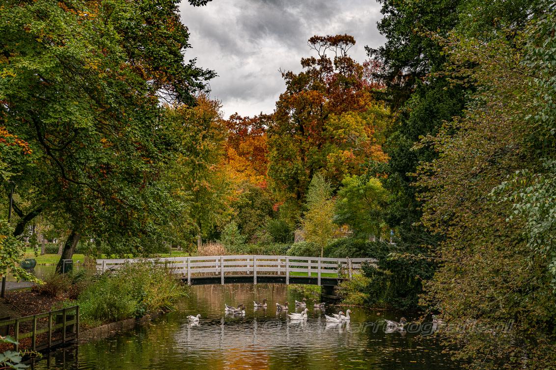 LDH 20201021 wilhelminapark-6936 v - En dan kom je zo maar in eens dit doorkijkje tegen in het park. Schilderachtig mooi. Herfstkleuren in optima forma. - foto door deharder op 26-10-2020 - deze foto bevat: kleuren, boom, herfst, doorkijkje, meppel, deharder