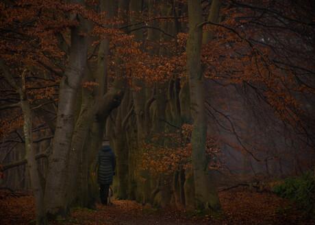 Het bomen laantje....