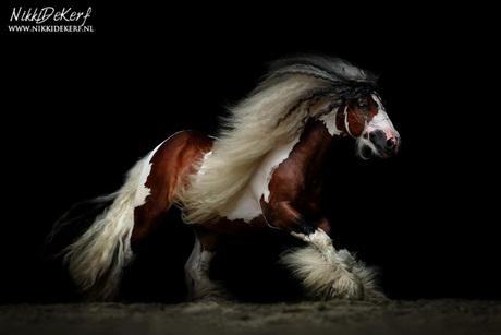 Equine darkness