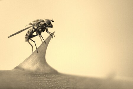 Vliegje op doorn - Nog maar een macro foto van vandaag. Deze bijgesneden en in sepia gezet. - foto door kasoracing op 23-09-2013 - deze foto bevat: macro, natuur, vlieg, zeeland, andres, kasoracing