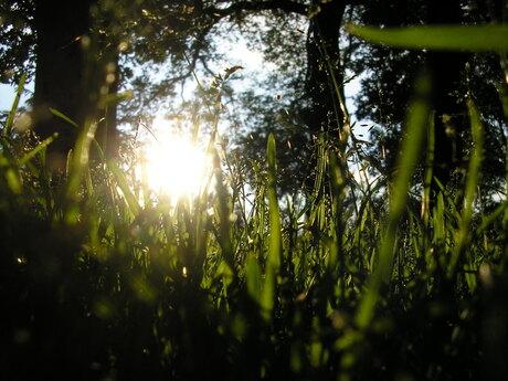 De avondzon door het gras zien zakken