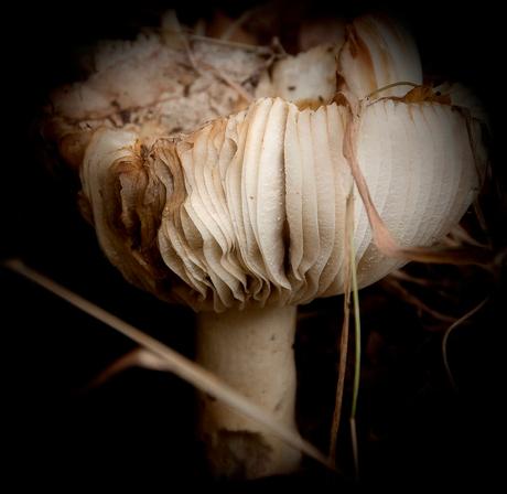 mushroom fashion