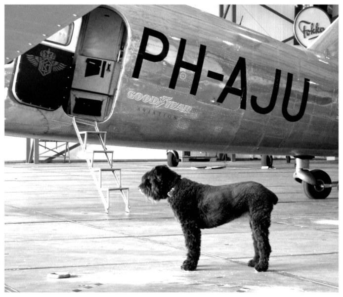 Klaar voor vertrek - Deze hond wacht ergens op lijkt het.  Zijn baasje was nog druk aan het sleutelen aan dit vliegtuig. - foto door rowanbouter op 29-07-2011 - deze foto bevat: huisdier, hond, vliegtuig, uiver, instappen, passagier, dc2