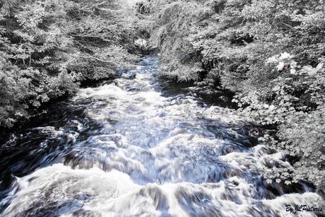 Wild Ice River