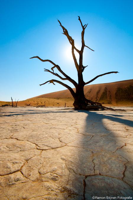 Dead Valley - Een van de dode bomen in Deadvlei, Namibië. - foto door eyefocus-76 op 18-06-2012 - deze foto bevat: boom, dood, afrika, namibie, deadvlei, dode bomen