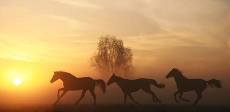 Sunrise runners