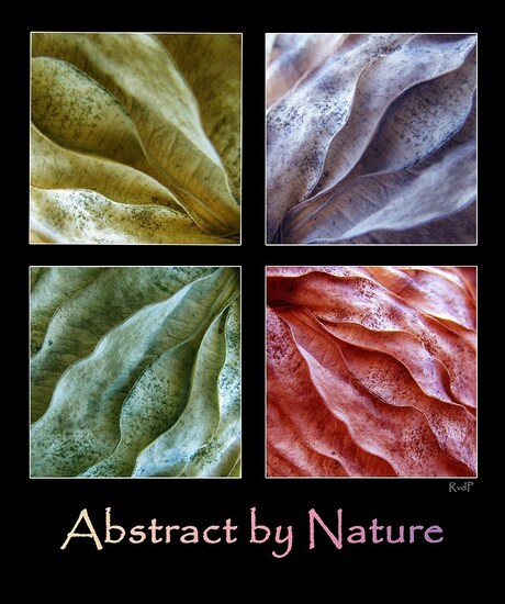 Abstract by Nature collage