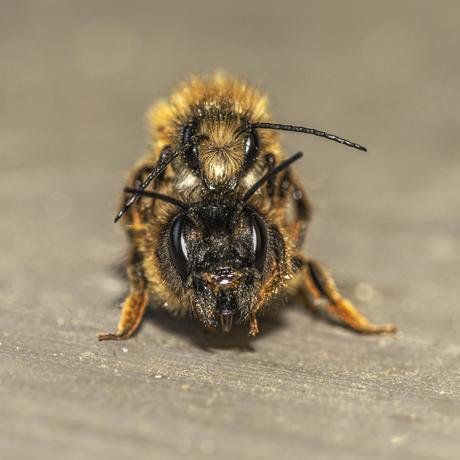 Bijenromance