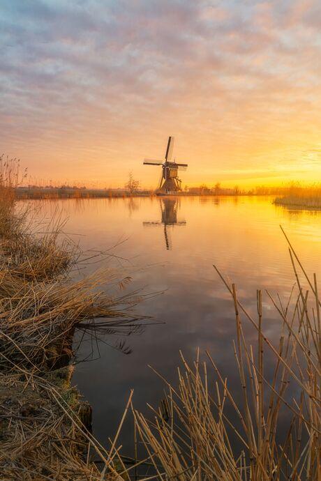 Golden hour in the polder