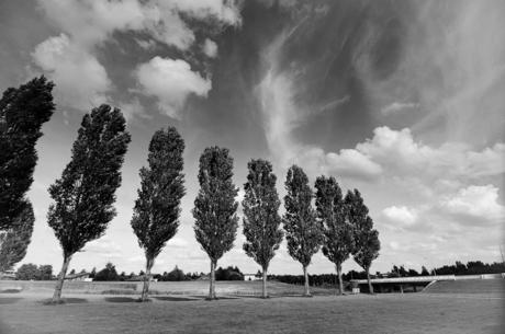 bomen en wolken