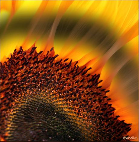 zonnewarmte voor willy.....