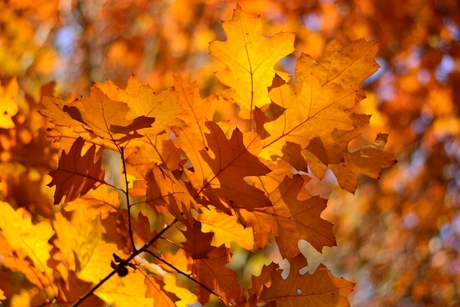 Het goud groeit aan de bomen...