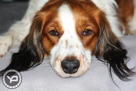 De niet-zo-enthousiaste foto hond.