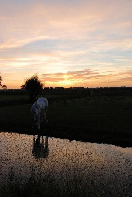 paard in de schemering