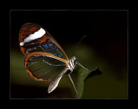 Vlindertuin No 3