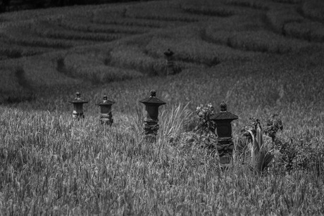 Black and white fields