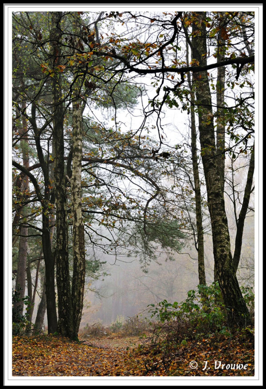 de Stulp - Mooi gebied bij Lage Vuursche - foto door janv2 op 07-12-2013 - deze foto bevat: mist, berk, dennenboom, berkenboom, deen, Lage vuursche, de Stulp - Deze foto mag gebruikt worden in een Zoom.nl publicatie