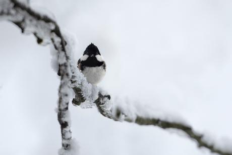 Meesje in de winter