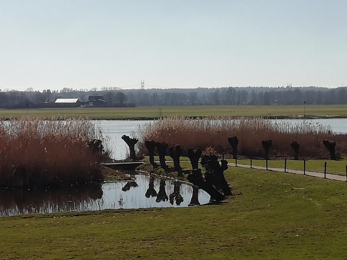 ZWOLLE VOORJAAR 2021 - Begin maart, een natuurkadootje! - foto door Koosje8 op 03-03-2021 - deze foto bevat: panorama, lente, natuur, bomen