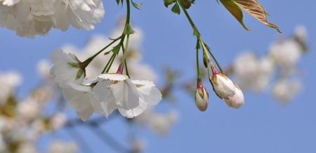 Lente! - Lente! - foto door korniehof op 31-07-2014 - deze foto bevat: macro, wit, lente, voorjaar