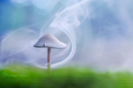 Smoking Mushroom