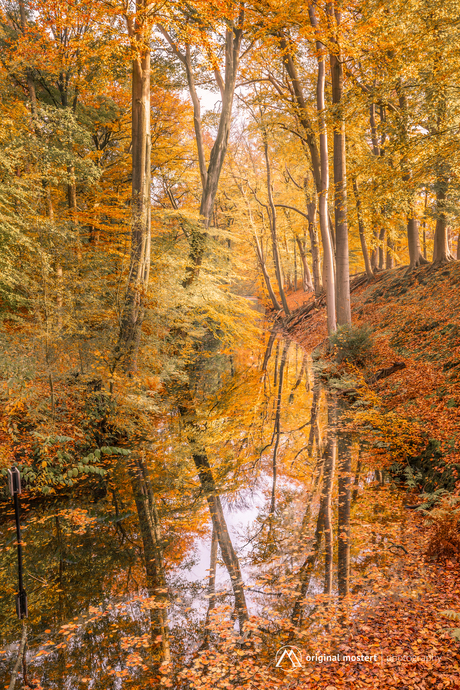 Reflecting forest...