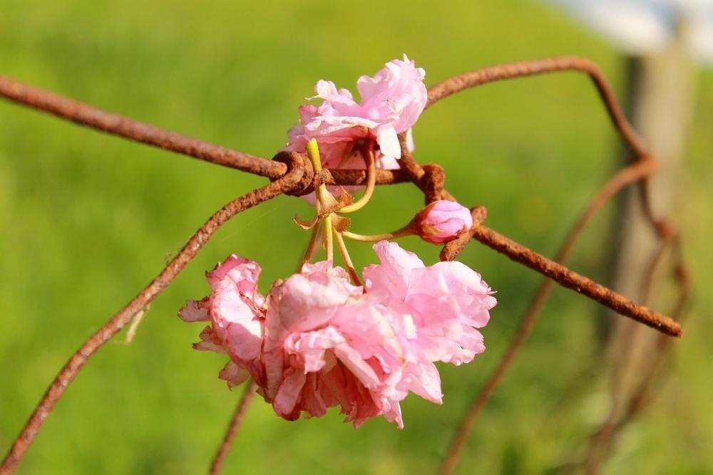 Verteld Verhaal - Laat je eigen fantasie de vrije loop en creëer bij deze foto je eigen verhaal - foto door ellisl op 30-04-2012 - deze foto bevat: gras, zon, bloem, natuur, eenzaam, buiten, verwelkt
