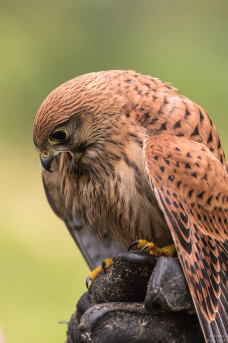 Canon Experience Day - Roofvogels_10