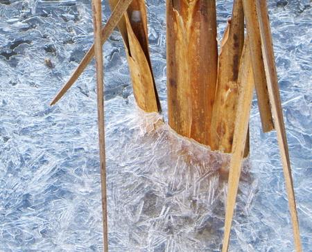 vlieskou - - - foto door johntomeij op 24-10-2008 - deze foto bevat: groot, ammers