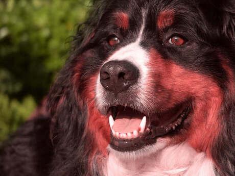 de hond van PINk