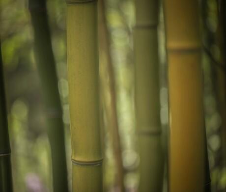 De stille kracht van Bamboe...