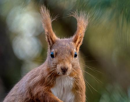 Eekhoorn portretje - Ze zijn zo fotogeniek die eekhoorntjes - foto door geld1846 op 06-05-2020