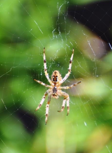 Spin in zijn web