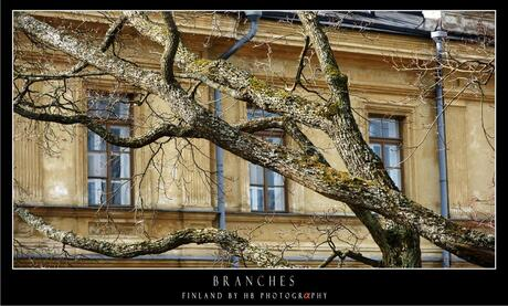 HB Branches