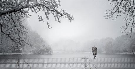 Winter in Den Haag 2