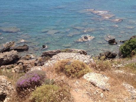Bloemen aan de zee